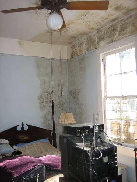 Can Mould Affect Our Health