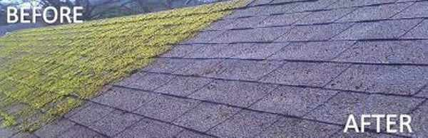 Dorking roof moss removal